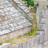 Details of an forgotten old Scottish Abbey Royalty Free Stock Image