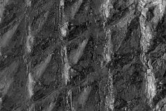 Details of fossilized plants on coal Stock Image