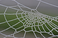 Details of Frozen Spider web Royalty Free Stock Photos