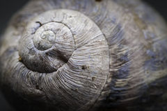 Detail of gastropod shell Royalty Free Stock Images