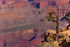Details of Grand Canyon Royalty Free Stock Image