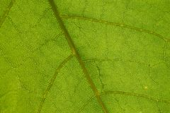 Details of green leaf Stock Photos
