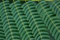 Details green leaf Royalty Free Stock Photography