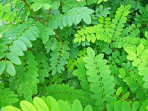 Details of green leaves Royalty Free Stock Images