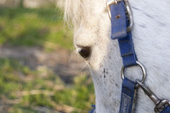 A details of horses with backlighting in the meadow Stock Images