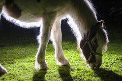 A details of horses with backlighting in the meadow Royalty Free Stock Photos