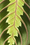 Details of a Leaf. Details of a exotic leaf Stock Photo