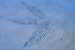 Details of a Leaf imprinted onto brown colored cement ground. Royalty Free Stock Image