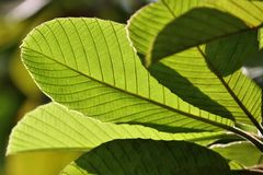 Details of a leaf with warm lighting Royalty Free Stock Images