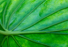 Details on the leaves. Royalty Free Stock Images
