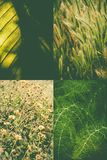 Green nature collage Royalty Free Stock Photography