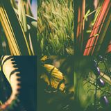 Green nature collage Royalty Free Stock Photo