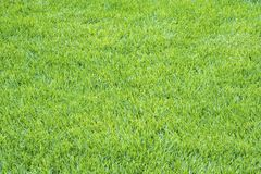 Details of Light Green Grass Background #1 Royalty Free Stock Image