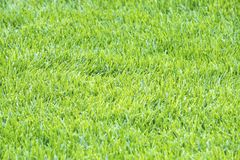 Details of Light Green Grass Background #2 Stock Images