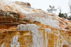 Details of Mammoth Hot Spring in Yellowstone national park Stock Photo