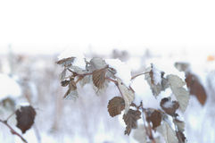 Details of nature in winter Stock Photo