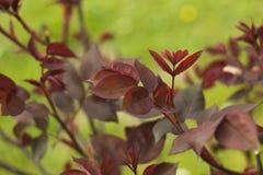 Details over een tuin Royalty-vrije Stock Foto