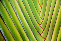 Details of palm leaves Stock Photos