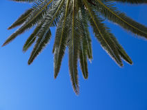 Details of palm tree Royalty Free Stock Photography
