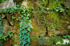 Details of picturesque medieval streets of Kutaisi town, capital of the western region of Imereti, Georgia. Ivy covered wall of Kutaisi town, capital of the royalty free stock images