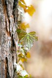 Details of plant over the tree. Maro forest details background, nice bokeh and soft pastel colors Royalty Free Stock Image