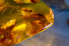 Details preserved in amber Stock Photo