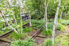 Details of the rails with birch trees in High Line Park, New York, USA stock photography