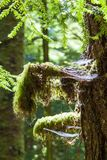 Rain forest in Vancouver island, British Columbia, Canada. Details of Rain forest in Vancouver island, British Columbia, Canada stock images