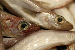 Details of raw fresh fish Stock Images