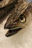 Details of raw fresh fish, close-up Stock Images
