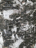 Details rind. Of background texture royalty free stock photo
