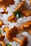Details risotto with chanterelles and parsley Royalty Free Stock Image