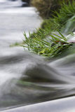 Details of river in motion. Close up details of river in motion blur with grassy riverbank Royalty Free Stock Photos