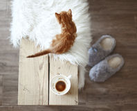 Details of rustic home. Still life details, cup of coffee on rustic bench, top view point Royalty Free Stock Photography