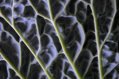 Details of Savoy cabbage lief Royalty Free Stock Images