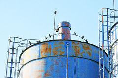 The details of silos, containers for grain with pigeons. On top of that to rest stock photos