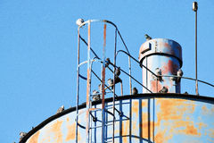 The details of silos, containers for grain with pigeons. On top of that to rest stock photography