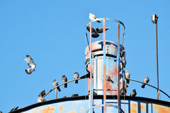 The details of silos, containers for grain with pigeons. On top of that to rest royalty free stock photography