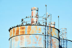 The details of silos, containers for grain with pigeons. On top of that to rest royalty free stock photo