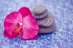 Details of daily spa, stones and orchid Royalty Free Stock Photo