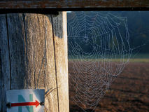 Details of spider web. Details of intricate spider web on fence, countryside in background royalty free stock photo