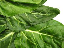 Details of spinach leaves Royalty Free Stock Photography