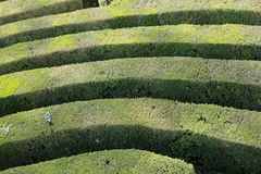 Details of thick hedges of a difficult maze of a garden Royalty Free Stock Images