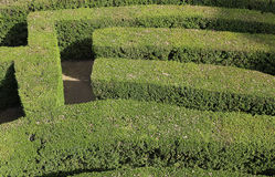 Details of thick hedges of a difficult maze Stock Photo