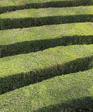 Details of thick hedges of a maze of a garden Stock Photography