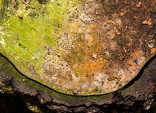 Details of tree stump Stock Image