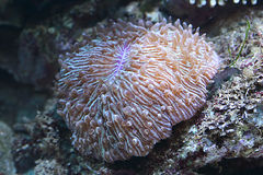 Sea coral and rocks. Details of underwater coral and rocks in a tropical ocean Stock Photo