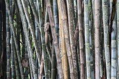 Details van bamboeboomstammen in een oud bamboebos stock fotografie