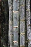 Details van bamboeboomstammen in een oud bamboebos stock afbeelding