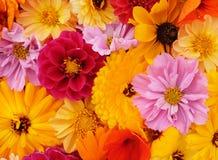 Details van bloemachtergrond met gele, roze en rode bloei royalty-vrije stock afbeelding